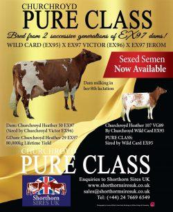 Churchroyd Pure Class Ad